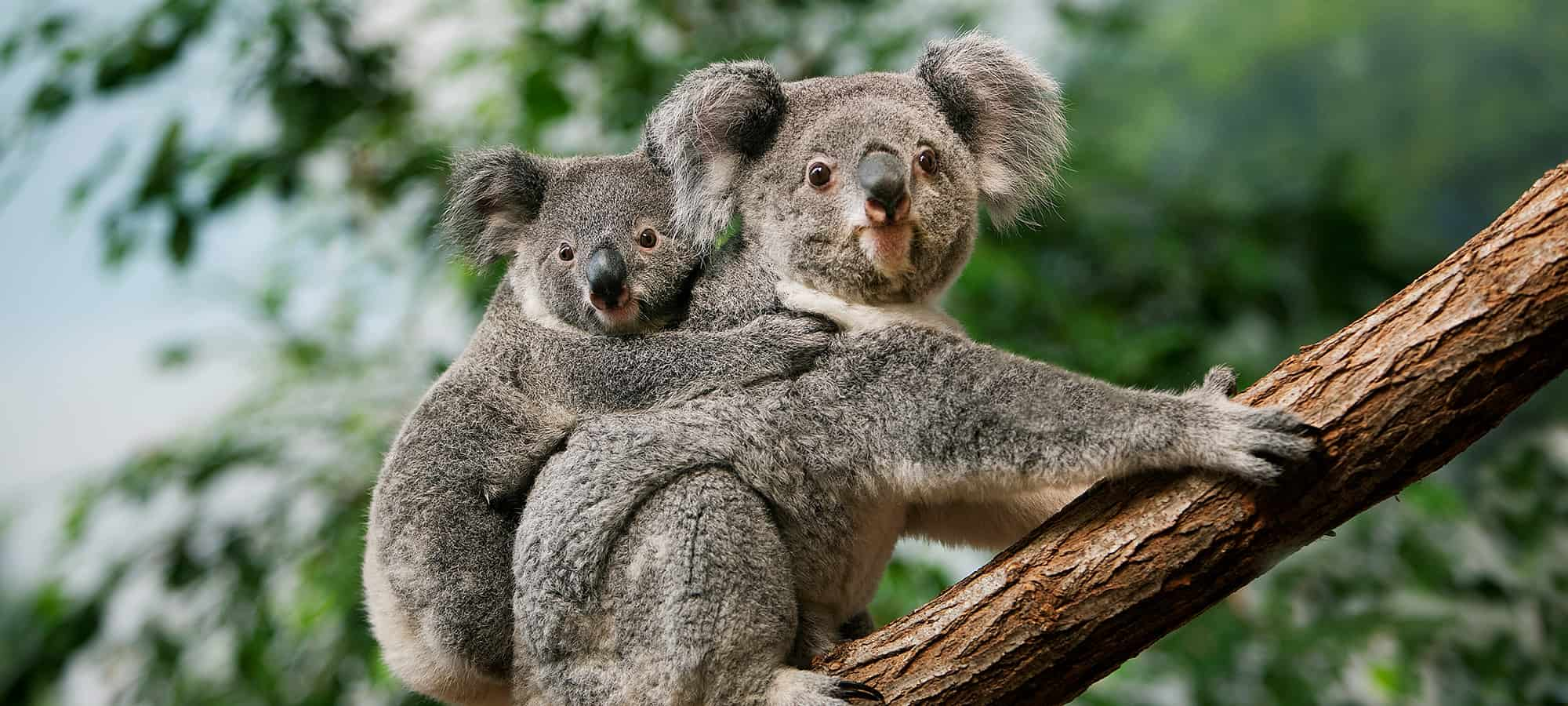 6 Ways to Experience the Flora and Fauna in Cairns