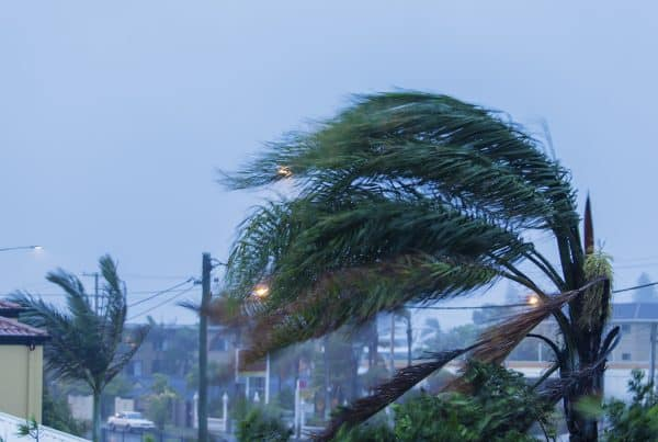 Image of apartment tops during cyclone with palm trees being blown sideways by cyclone, during cyclone season