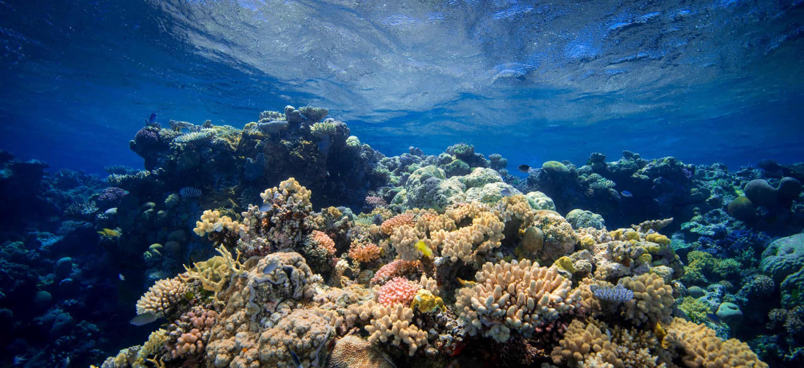 Explore the Cairns Aquarium