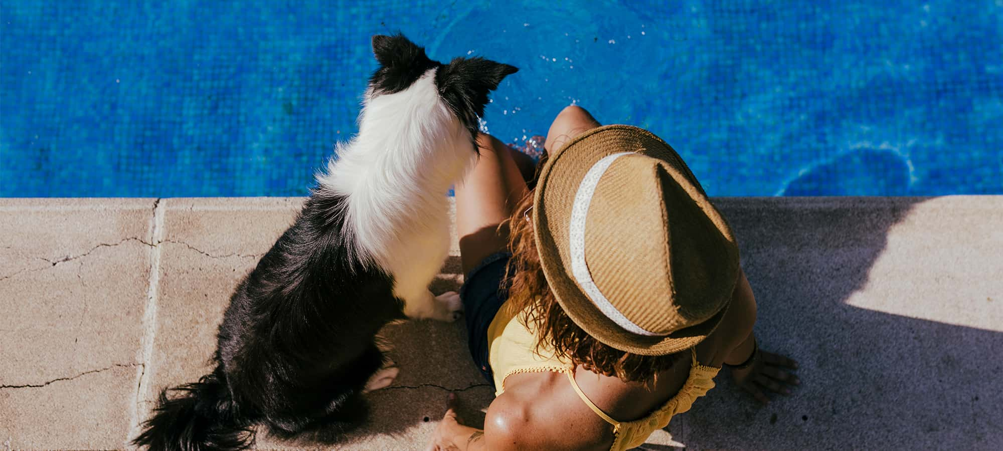 12 Pet Friendly Accommodation Options in Cairns and Surrounds