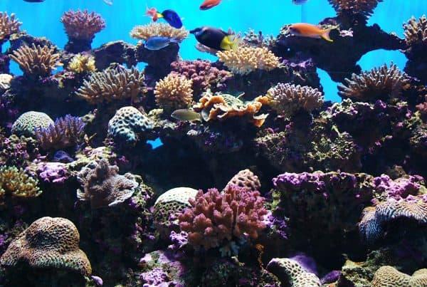 AquaFest At Cairns Aquarium